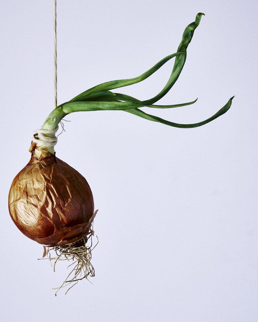 Hanging Onion